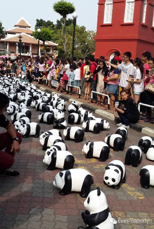 Panda in Malacca 05