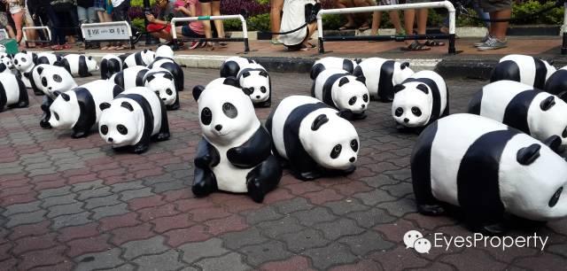 Panda in Malacca 16